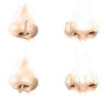four noses copy