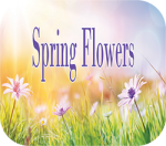 springflowers_website2__13941.1588616847.1280.1280